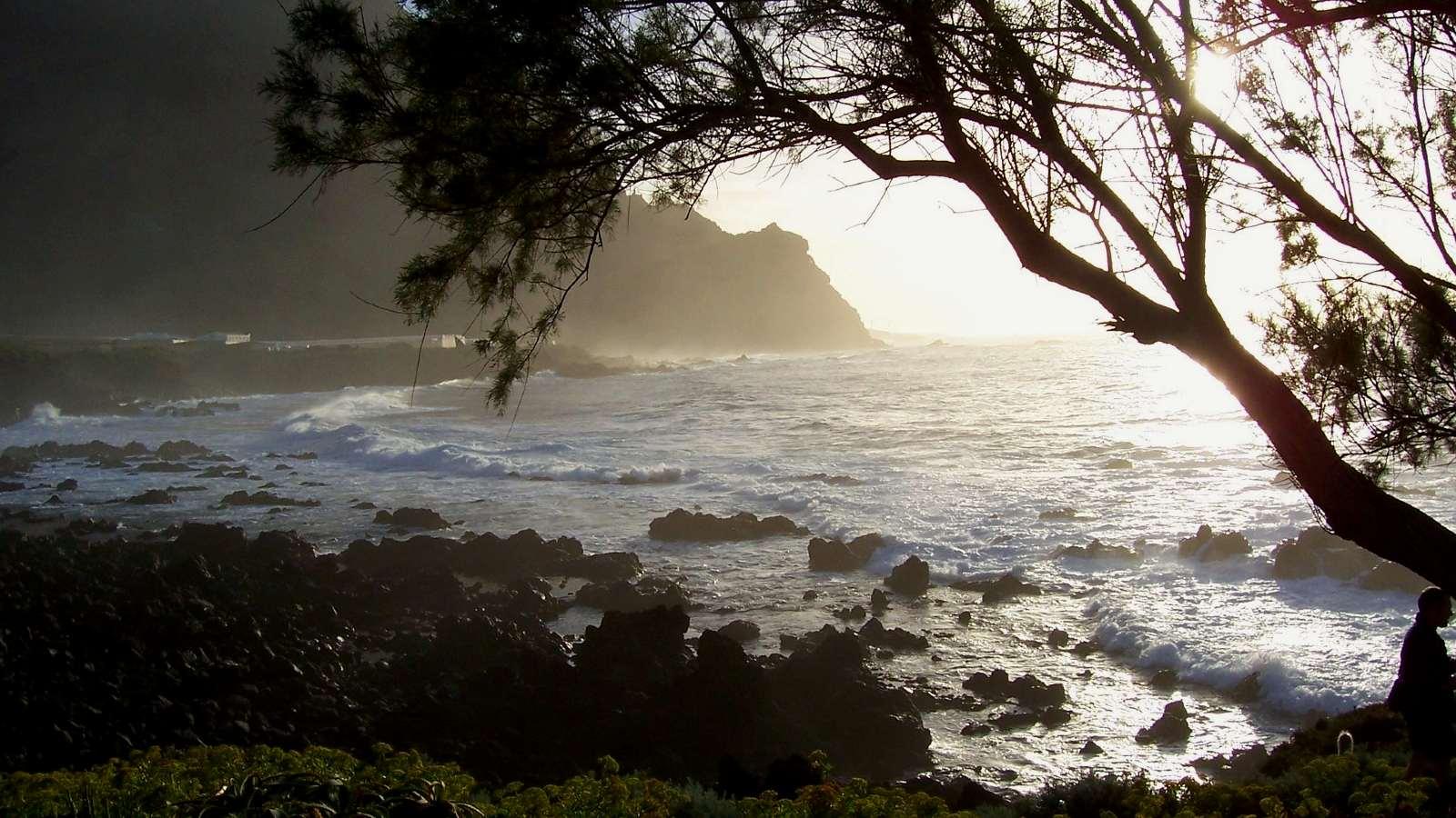 Coucher de soleil sur la côte et l'arbre tamaris à droite